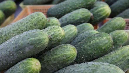 Первые овощи нового урожая планируют продавать в Могилёве с конца февраля