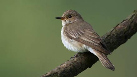 Принять участие в голосовании за «Птицу года Беларуси» в 2021 году можно до 1 февраля