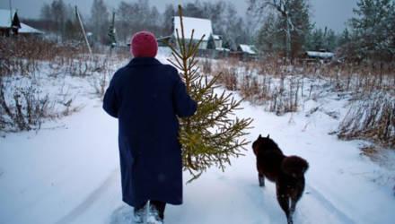 Коммунальщики помогут могилевчанам утилизировать новогодние ёлки