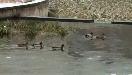 Причал может появиться в районе реки Дубровенка в Могилёве (видео)