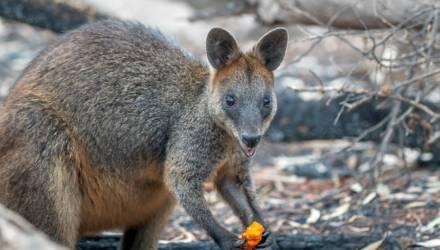 В Австралии на восстановление природы после пожаров выделят около $ 35 млн