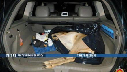 ГАИ в Бобруйске задержала джип с тушей косули в багажнике. Пассажир с ружьем пытался сбежать (видео)