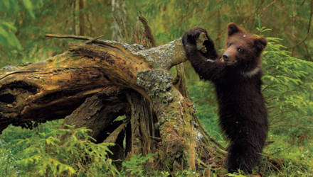 Французская кинокомпания хочет снять фильм о дикой природе Беларуси