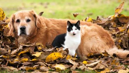 Появился специальный интернет-сервис для поиска домашних животных