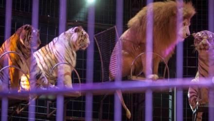 Украина готовится запретить использование животных в цирках