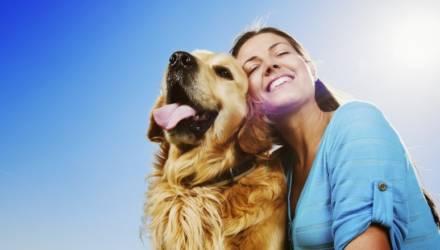 Налог на собак: что нужно знать владельцам четвероногих в Могилёве