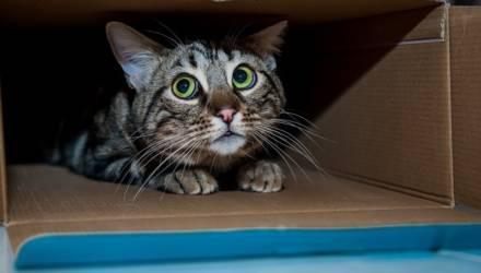9 обычных на первый взгляд вещей, которые на самом деле пугают вашу кошку