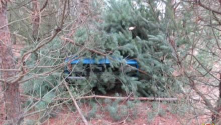 Трое жителей Бобруйского района похитили машину и спрятали в лесу