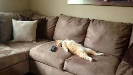 Что будет с организмом, если провести каникулы на диване