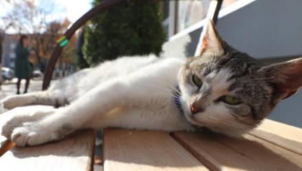 В Беларуси обсуждают введение массовой стерилизации бродячих котов