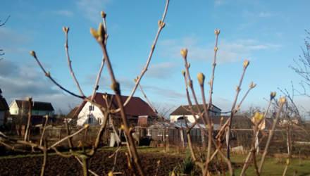 Январь-2020 в Могилёвской области оказался на 6 градусов теплее нормы