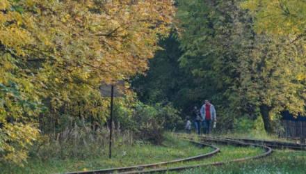 Схему озеленённых территорий общего пользования разработают в Могилёве