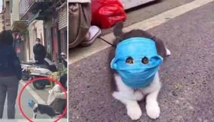 Медицинские маски не только для людей: в Китае защищают питомцев от коронавируса,как могут