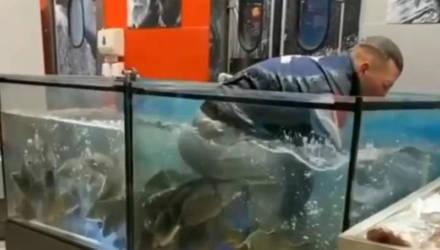 В Гомеле в супермаркете парень нырнул в аквариум с живой рыбой. Оказывается, был повод