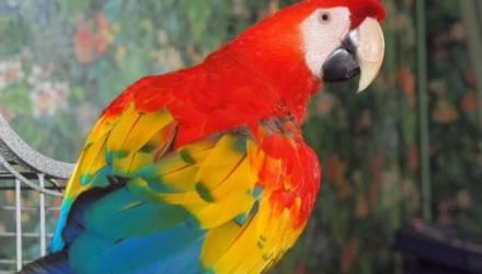Говорящий попугай спас хозяев от гибели в пожаре
