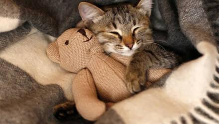 Что значит поза, в которой спит твоя кошка (7 поз)