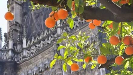 Биогаз из апельсинов планируют производить в Испании