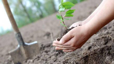 Центр по выращиванию посадочного материала с закрытой корневой системой в Могилевском лесхозе откроют летом