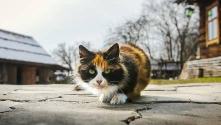 Проект постановления об обращении с животными вынесен на общественное обсуждение