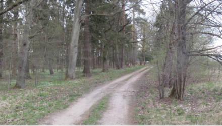 В Толочинском районе житель Шкловщины напал в лесу на девушку