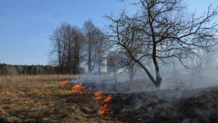 В Могилевской области из-за палов травы горят дома и сараи