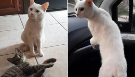 Уличный кот обрёл семью после вирусного видео, где он просит прохожую купить его любимый корм