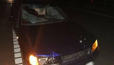 Смерть под колесами в Бобруйском районе
