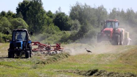 Аграрии Могилевского района планируют заготовить 208 тыс. тонн сенажа