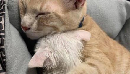 10 трогательных фото, когда коты проявляли такую любовь, на которую порой не способны даже люди