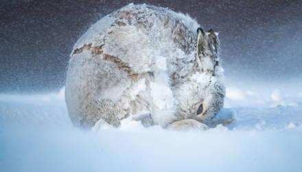 Фотофакт. Посмотрите на изображения животных и природы, которые назвали лучшими в США