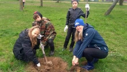 Воспитанники центра туризма, экскурсий и краеведения «Криница» посадили в Могилеве деревья