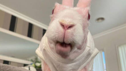 """Его хотели усыпить, но он стал звездой """"Инстаграма"""": история кролика-мутанта, покорившего мир"""