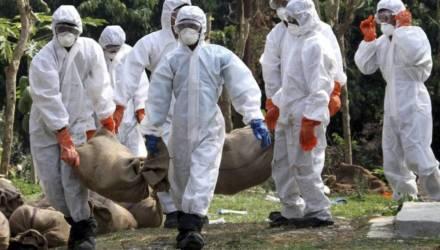В Китае обнаружили новый штамм смертельного для человека свиного гриппа