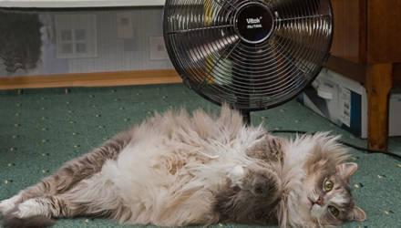 Хуже всего переносят жару кошки. Какие симптомы перегрева у животных и что делать